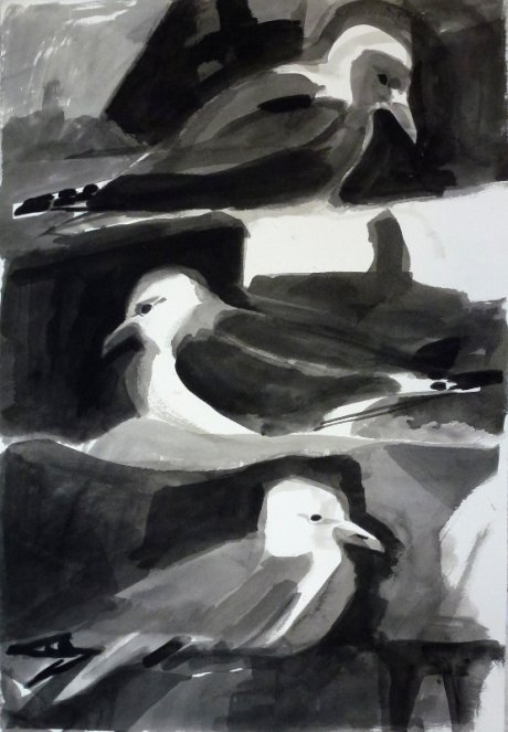 Kittiwakes, seabirds, ink, drawing, dunbar