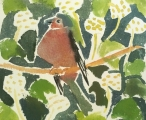 Chaffinch in Ivy