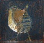 Shetland Wren 1