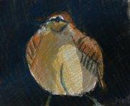 Shetland Wren 2