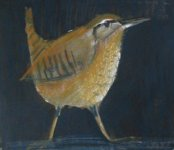 Shetland Wren 3