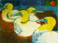 Bass Rock Gannets
