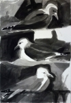 Kittiwake Colony
