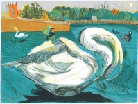 Swans and Coots
