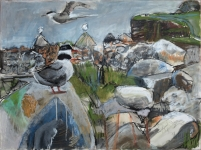 Arctic Tern colony, boulder beach, Shetland