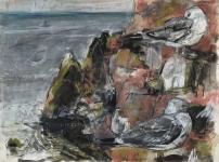 Dunbar kittiwakes