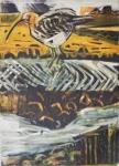 Feeding Curlew