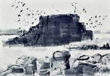 Fidra gulls and rocks