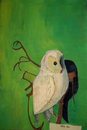 Albino Barn Owl