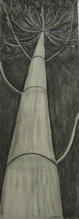Giant Hogweed (Night)