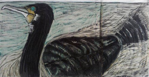 Summer Isles Cormorant