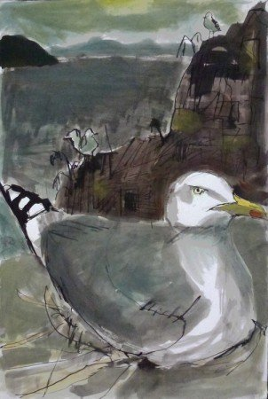Nesting Herring Gull, Bass Rock