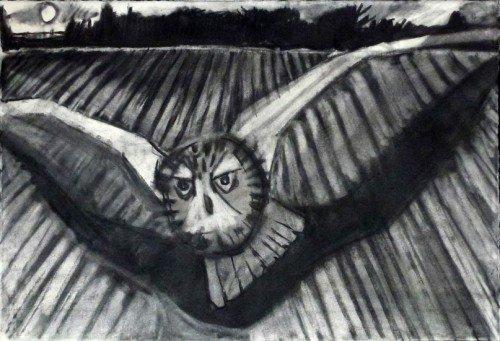 Short-Eared Owl, Dunbar