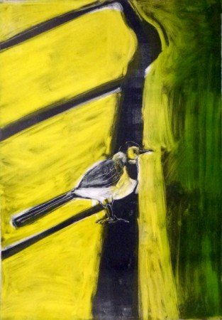 Pied Wagtail in Shadow