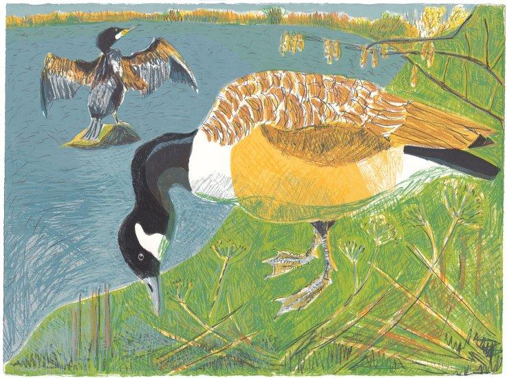 Goose and Cormorant