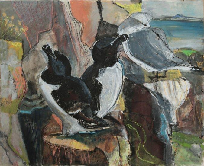 Seabird ledges, St Abb's Head