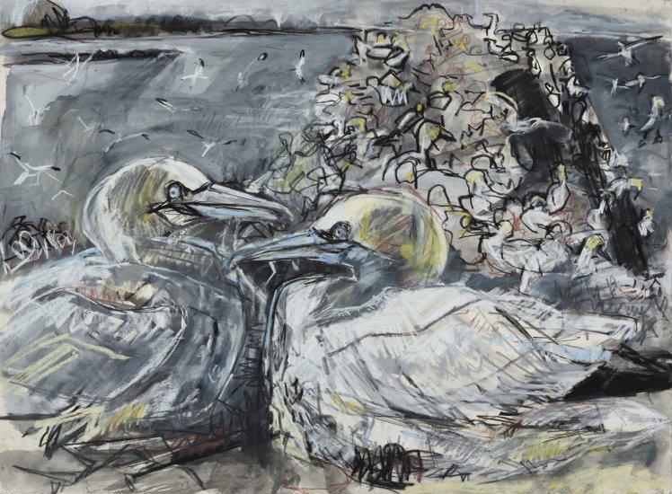 Gannet colony, Bass Rock