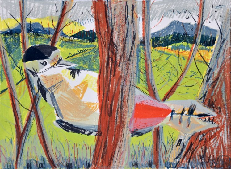 Northumbrian Woodpecker