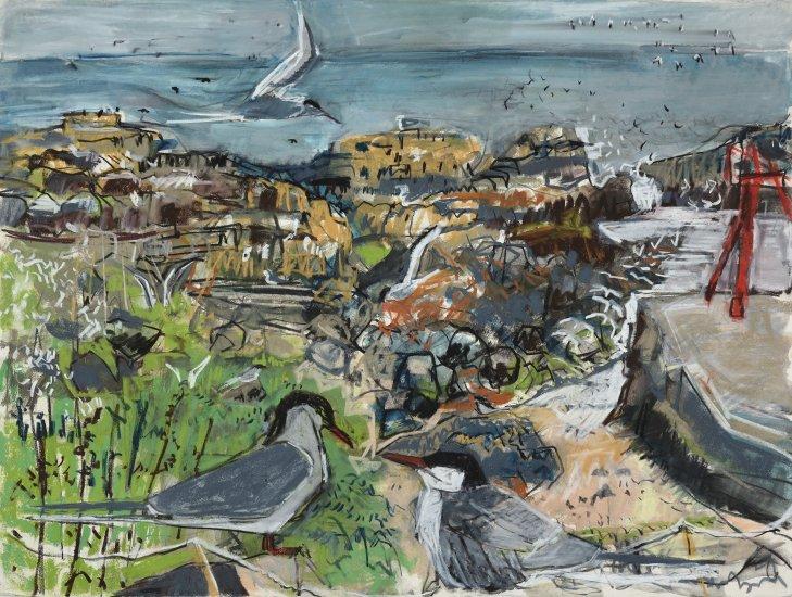Tern colony, Isle of May