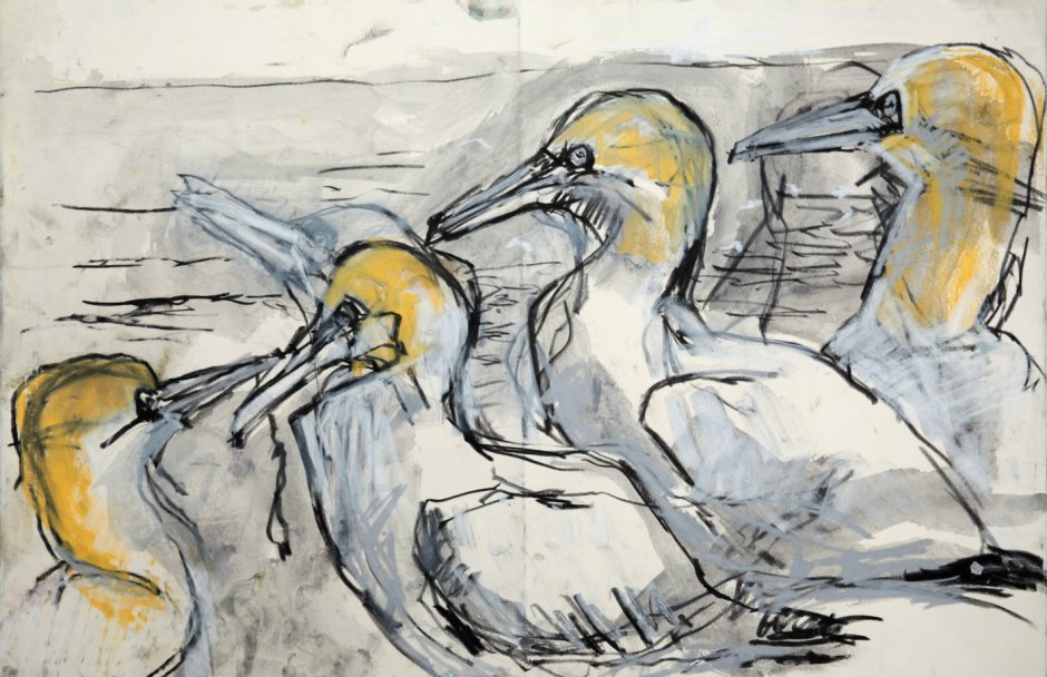 Four Gannets, mixed media on paper